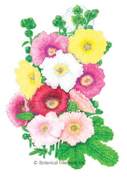 Hollyhock Happy Lights Seeds