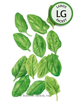Baby Greens Spinach Seeds (LG)