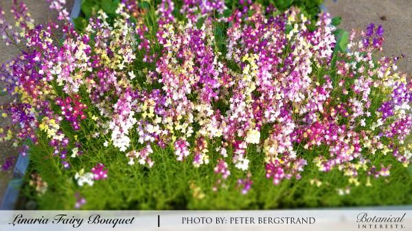 Flower Seeds, Flower Seed Packets: Perrenial, Annual