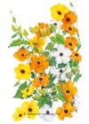 Black Eyed Susan Vine HEIRLOOM Seeds