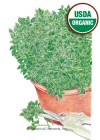 Basil Greek Yevani Organic Seeds