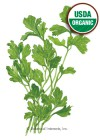 Parsley Italian Dark Green Flat Organic HEIRLOOM Seeds