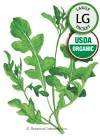 Arugula Rocket Salad Roquette Organic HEIRLOOM Seeds (LG)