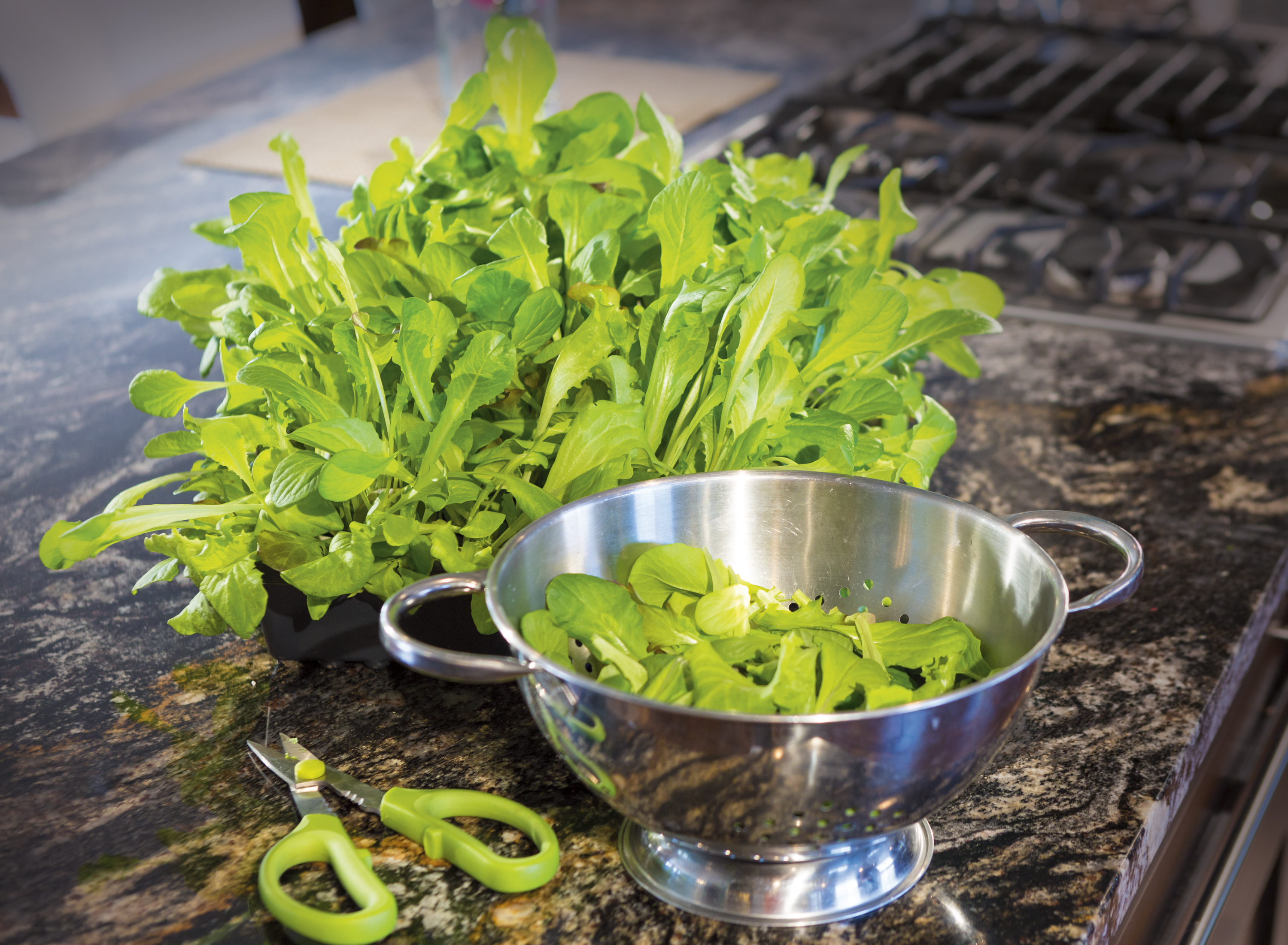 Microgreens and Baby Greens: Sow and Grow Guide