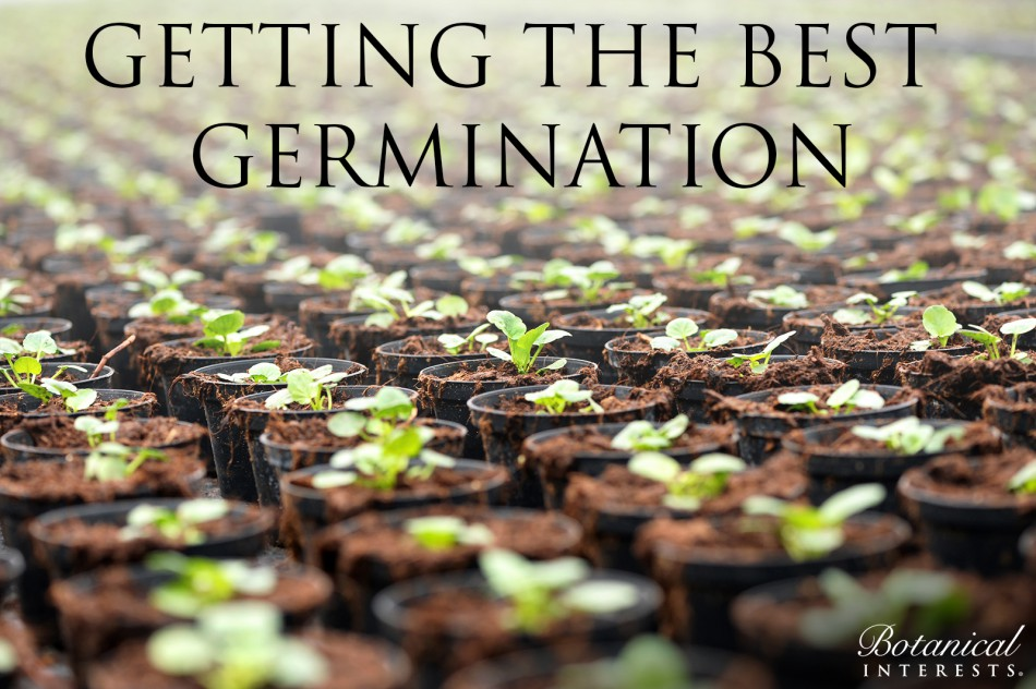 Getting the Best Germination