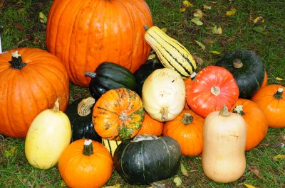 Squash: Pests and Diseases