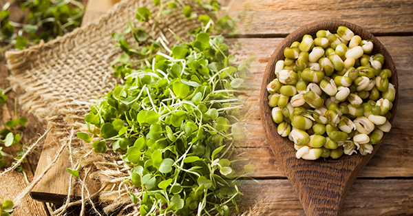 Microgreens and Sprouts:  What is the Difference?